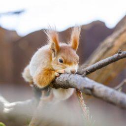 Mondes imaginaires : L'écureuil
