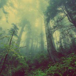 Au Crève-Cœur : dans la forêt des Minuscules…